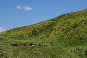 Kirghizistan : Jalal-Abad