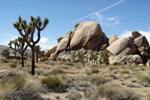 Parc national de Joshua Tree :