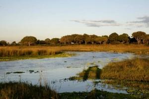 Katavi (Parc National) :