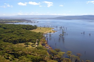 Kenya : Lac Nakuru au Kenya