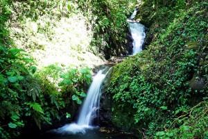Monteverde :