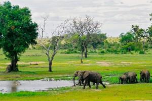 Afrique du Sud : Le Parc Kruger