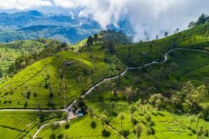 Sri Lanka : Plantation de thé vert de Lipton's Seat, Haputale