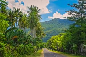 Sumbawa : Route à travers de la Jungle de Sumbawa