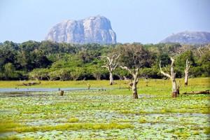 Parc national de Yala :