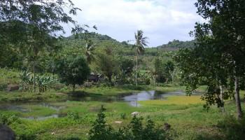 Ampana