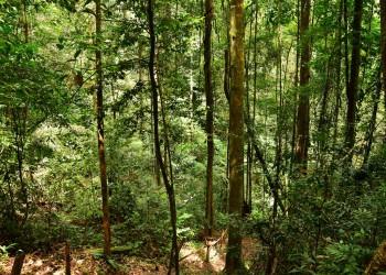 Brownsberg (parc naturel)