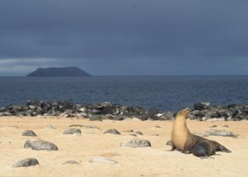 l'Île Isabela