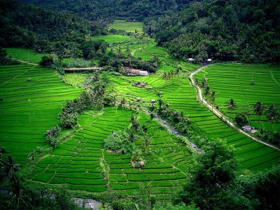 Bali : Bali_March-9