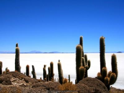 Bolivie : Salar Uyuni - Bolivie