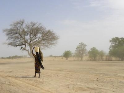 Cameroun : CAMEROUN 105