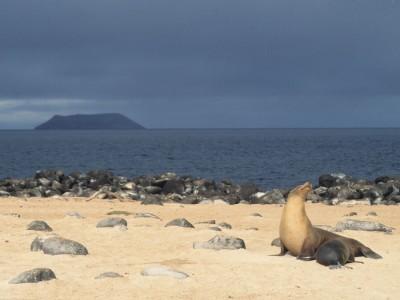 Îles Galápagos : Galapagos sea lion nursing, Galápagos Islands, Ecuador - nursery with a view
