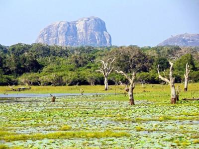 Photo de : Le parc national de Yala