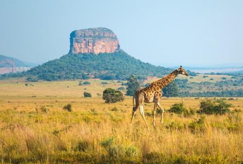 Afrique du Sud : Entabeni Safari Wildlife Reserve