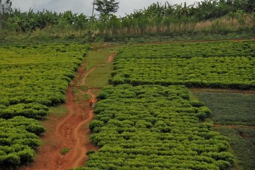Bujumbura : Road between Burundi Gitega and Bujumbura