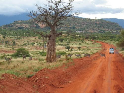 Kenya : African safari route