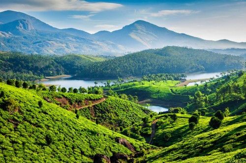 Kerala : Plantations de thé au Kerala