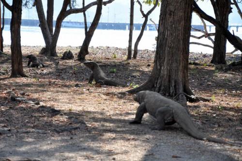 île de Komodo :