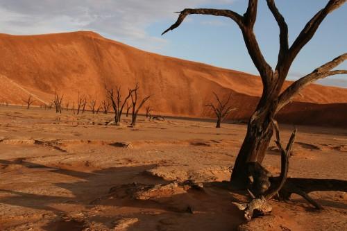 Namibie : Death Vlei