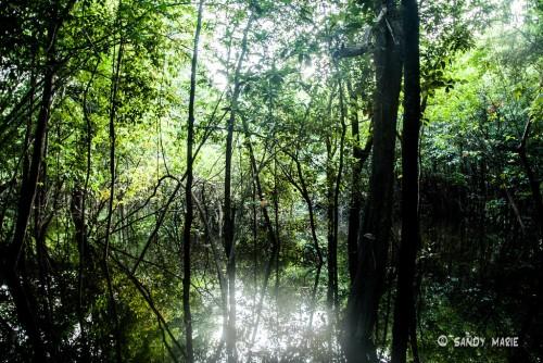 Oriente (Amazonie) : amazonie