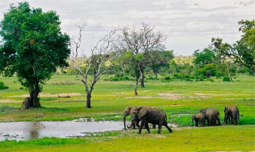 Parc Kruger : big zoo