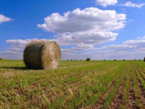 Pays de la Loire : Wheel and lines