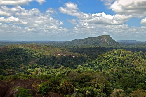 Surinam : Amazon jungle from above