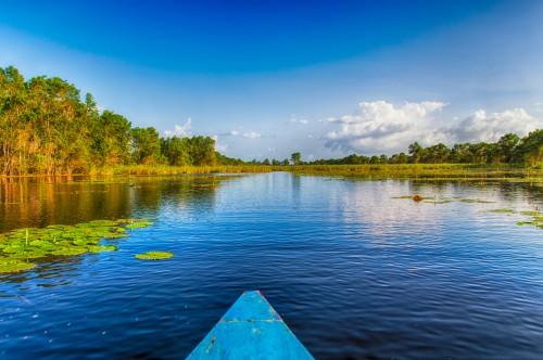 Surinam : Marais de Matapica
