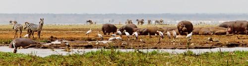 Tanzanie : Plein d'animaux !