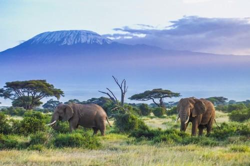 Tanzanie : Deux éléphants et le Kilimandjaro en arrière plan