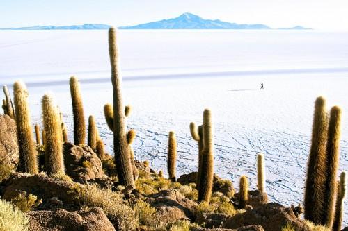 Uyuni : Isla Incahuasi, Salar de Uyuni, Bolivia