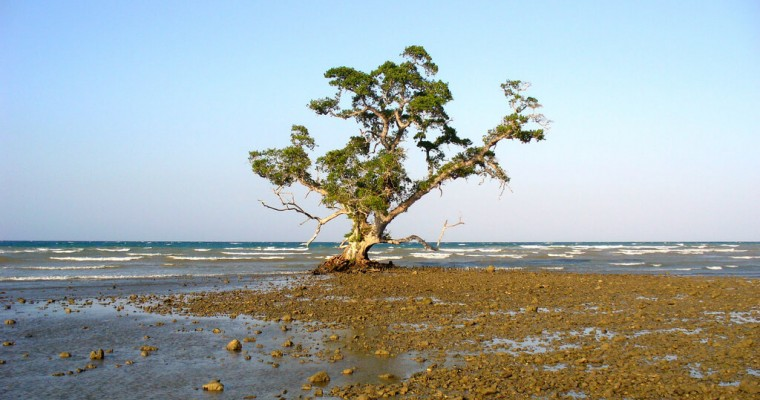 Le Timor Oriental