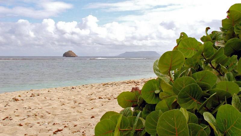 L'île de la Désirade