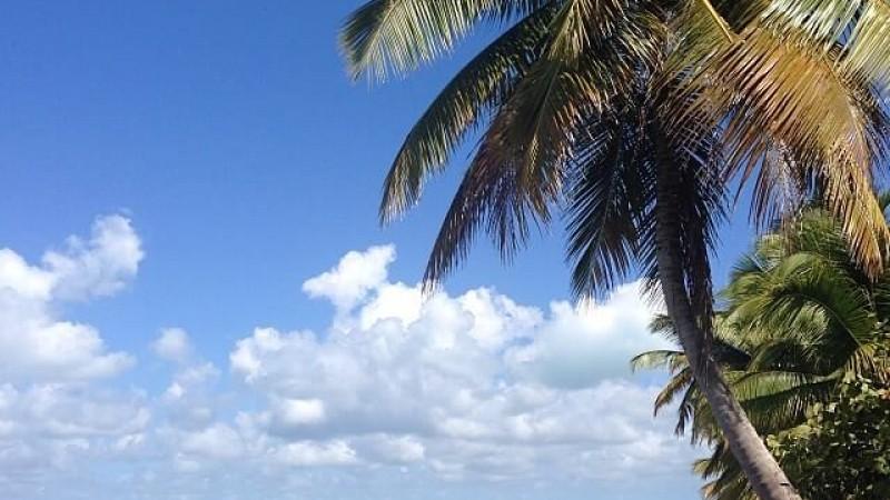 L'Île Saona