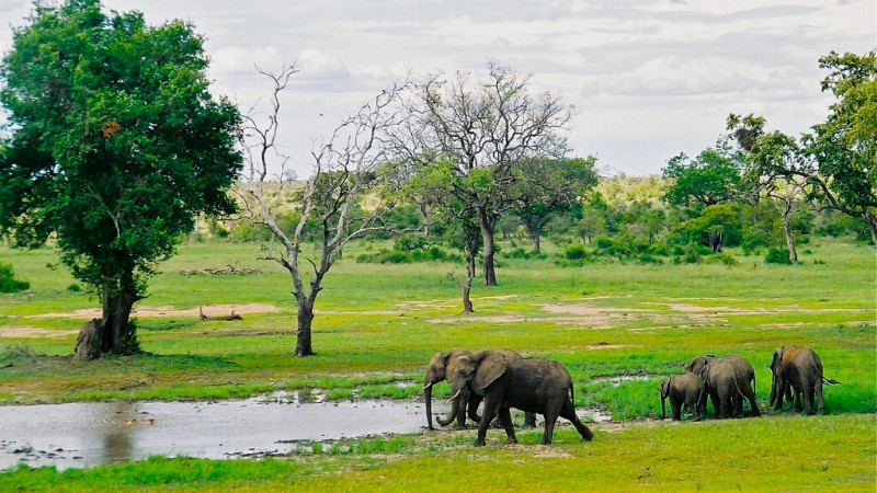 Le Parc Kruger