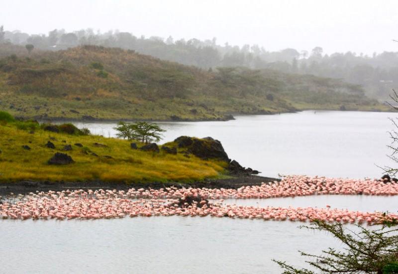 Arusha (Parc National)