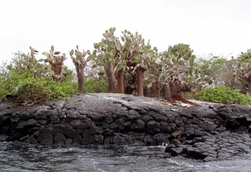 L'Île Baltra