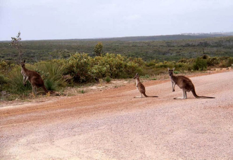 Le Parc National Cape Arid