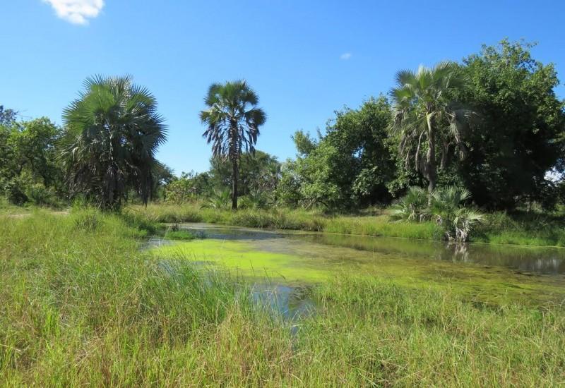 Le Parc national de Gorongosa