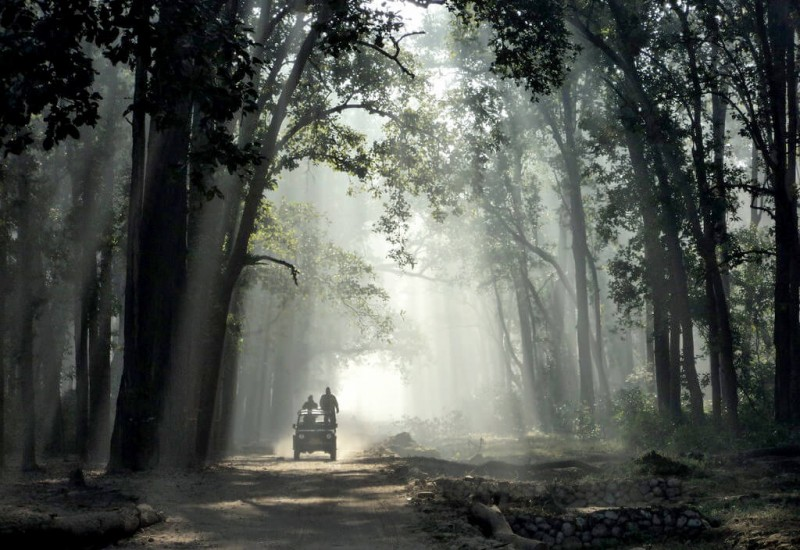 Le Parc national Jim Corbett