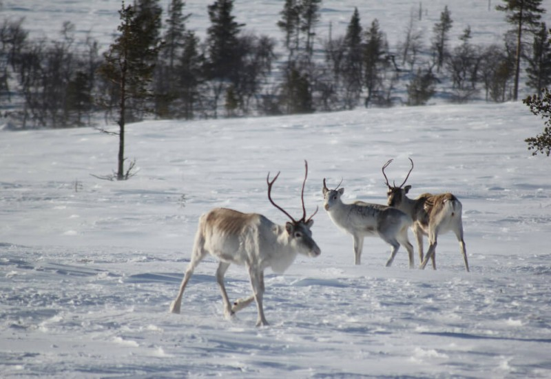 La Laponie (Rovaniemi)