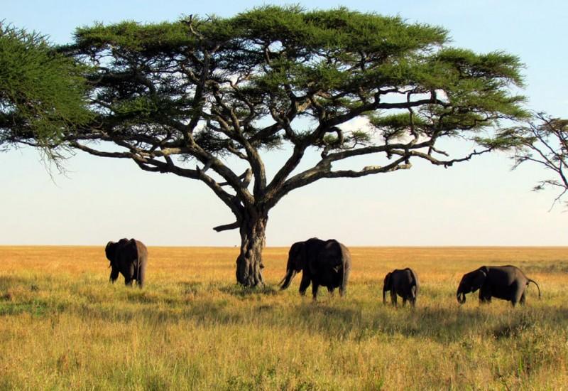 Le Parc National du Haut Niger