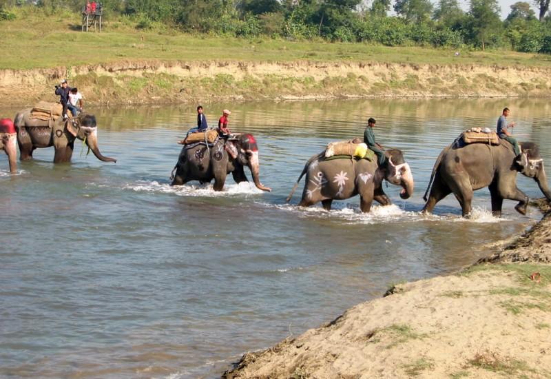Royal Chitwan (Parc national)