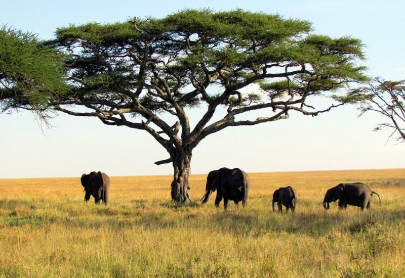 Serengeti (Parc National)