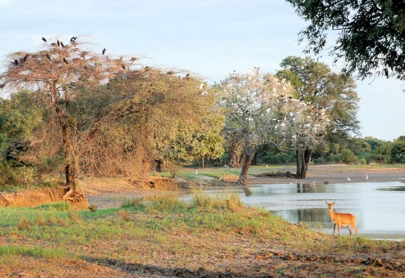 Parc national de Luangwa Sud (South Luangwa)