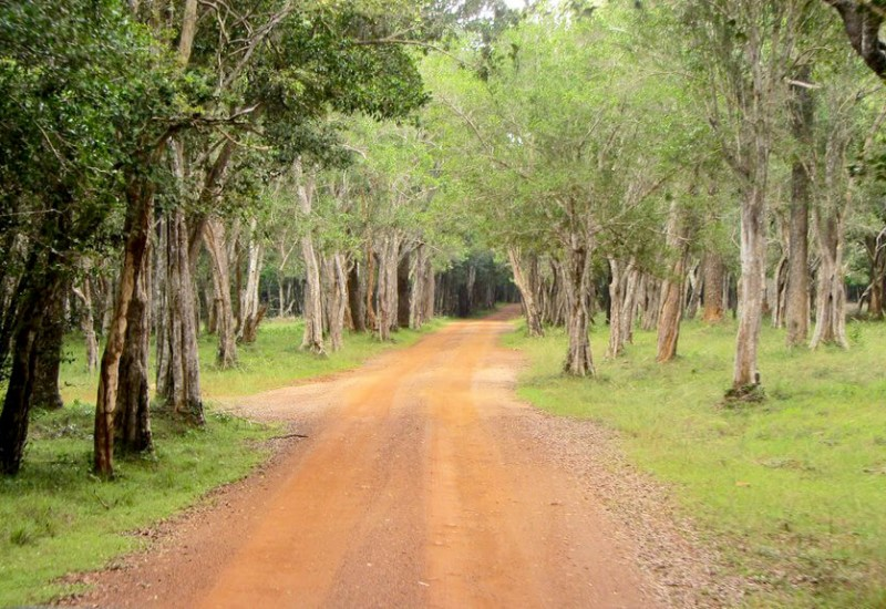 Le Parc national de Wilpattu