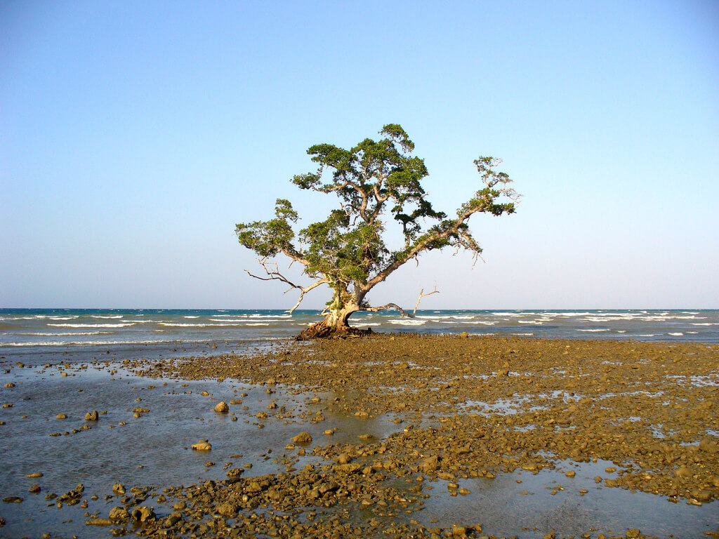Timor Oriental : Pantai Wataboo, Osolata, East Timor