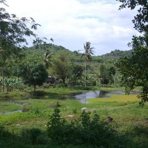 Sulawesi (Célèbes)