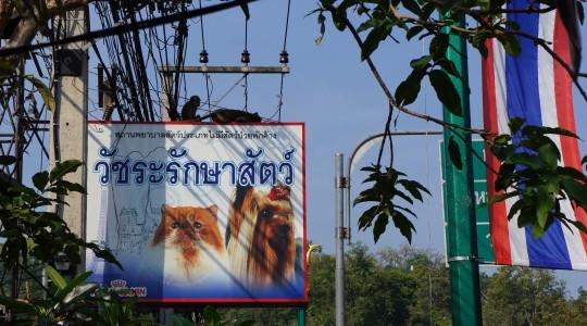 Comment créer une entreprise en Thaïlande ?