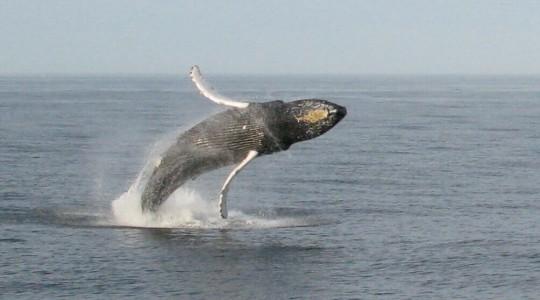 Voici les endroits où observer des baleines aux États-Unis avec les bonnes périodes d'observation